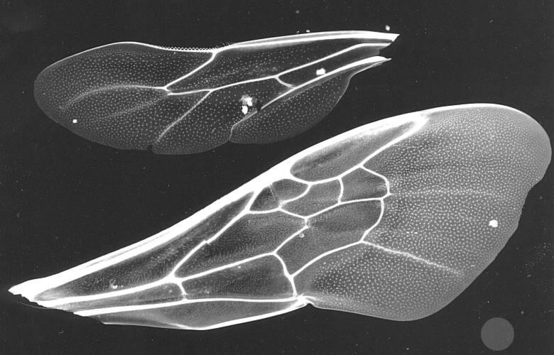 Крылья для пчелки своими руками фото